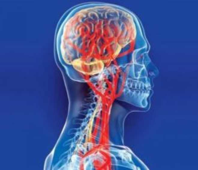Курение и мозг, описание и характеристика проблемы