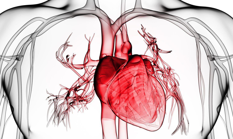 Какой вред курение наносит сердечно-сосудистой системе?
